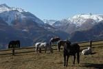 caval ( archives Lo Gnalèi - photo : Bruno Domaine )